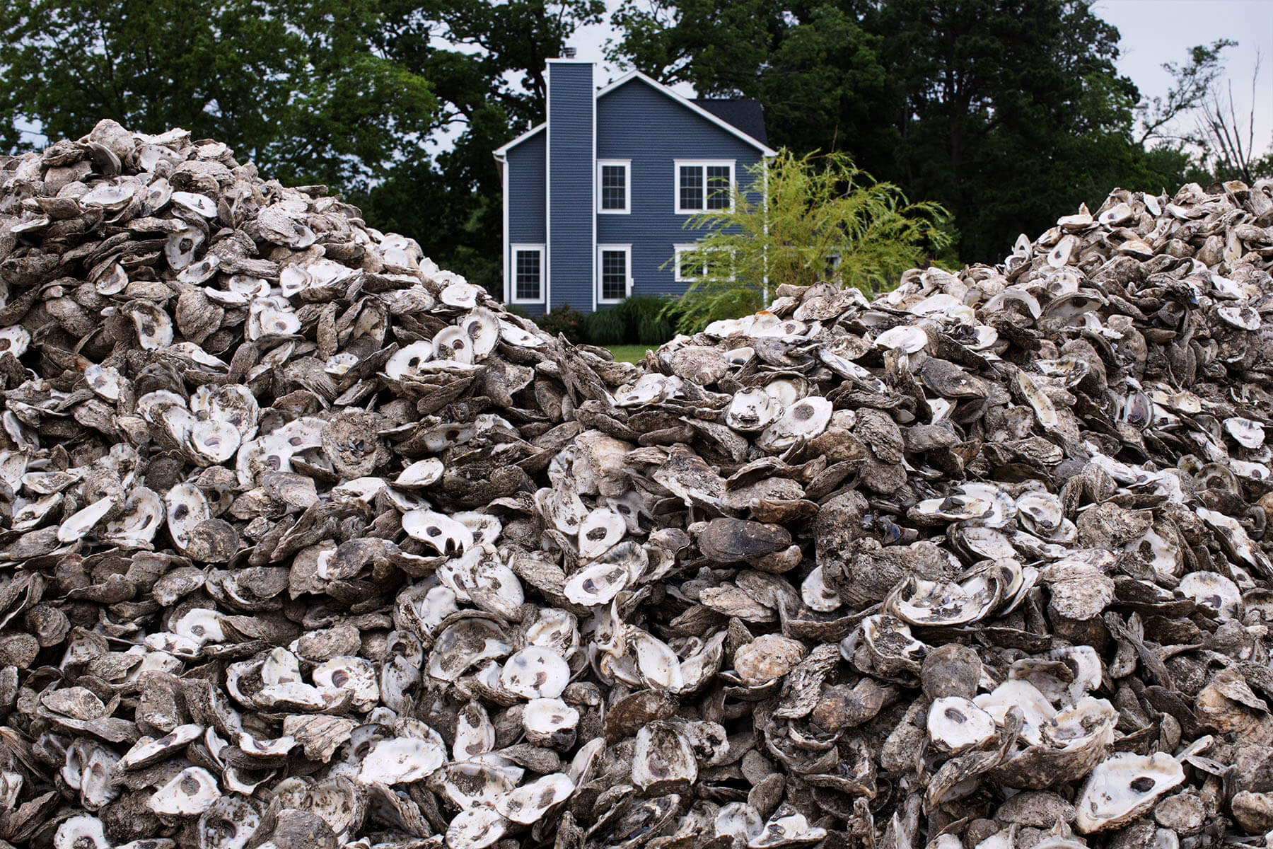 A pile of oysters with a house behind it.