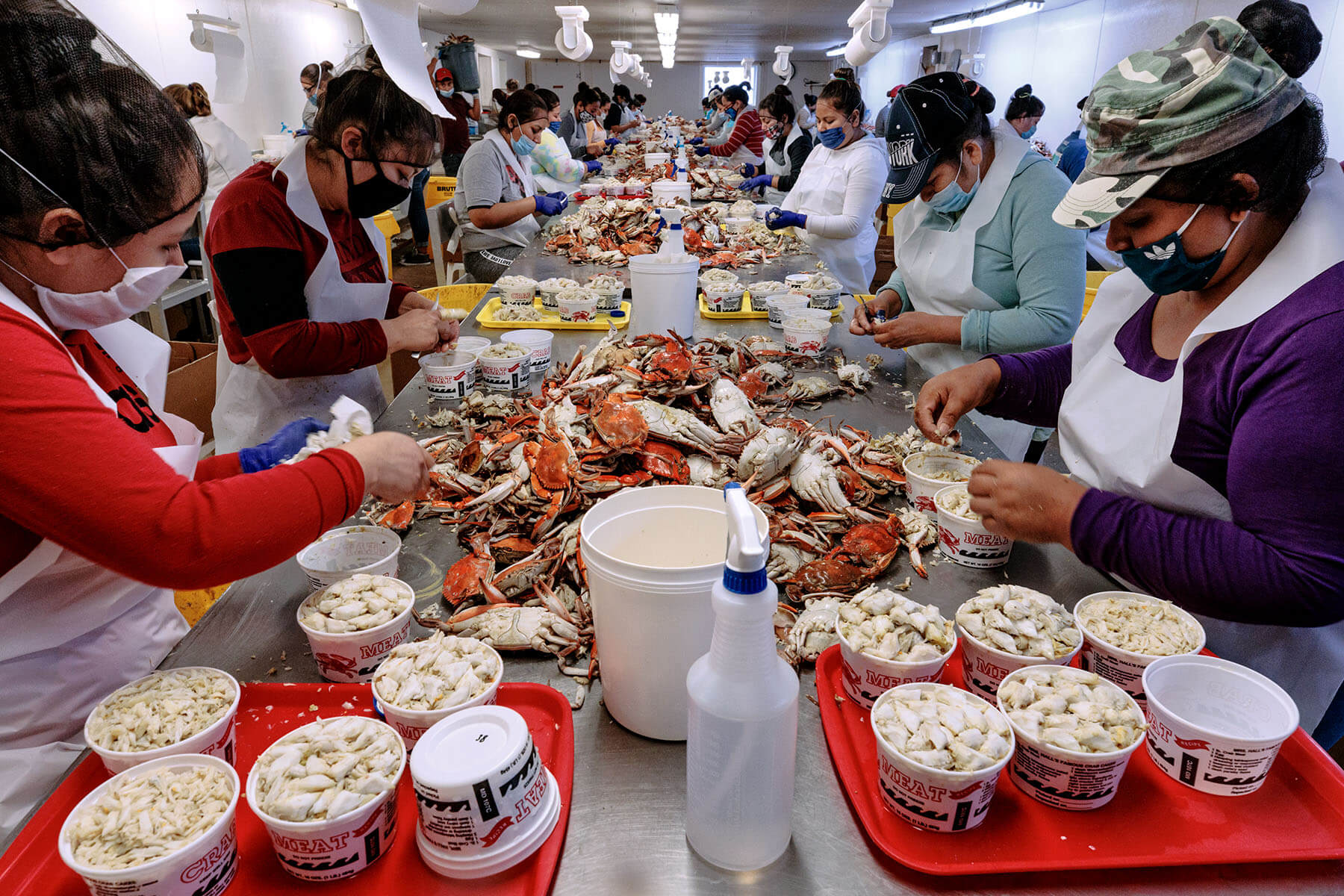 Workers pick crabs at crab house.