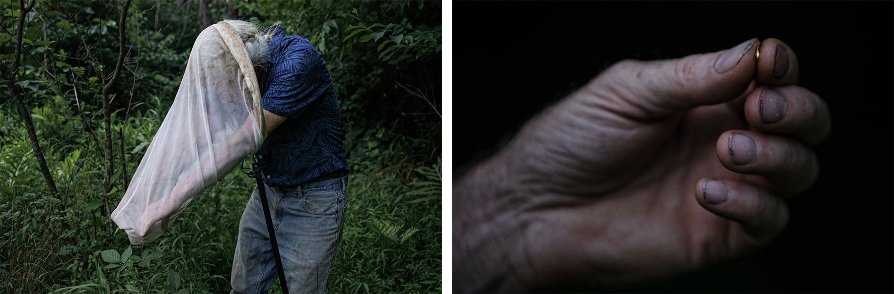 (Left) Sam Droege digs through his bug net. (Right) Close up of a male firefly.