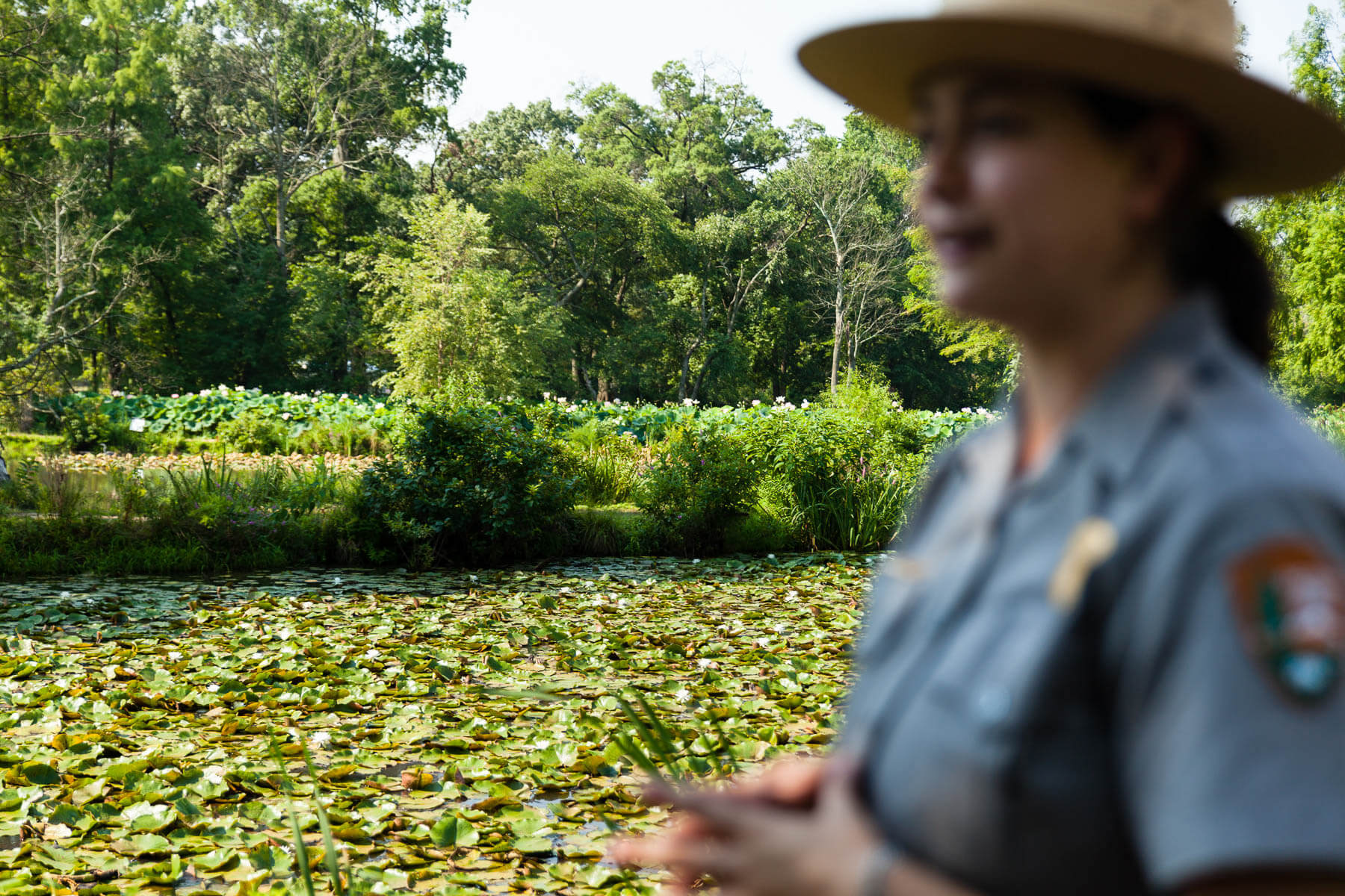 Celebrate the anacostia by visiting these six sites chesapeake bay interpretive ranger chelcey nordstrom leads a tour during peak lotus flower bloom at kenilworth park and aquatic gardens in washington dc photo by izmirmasajfo