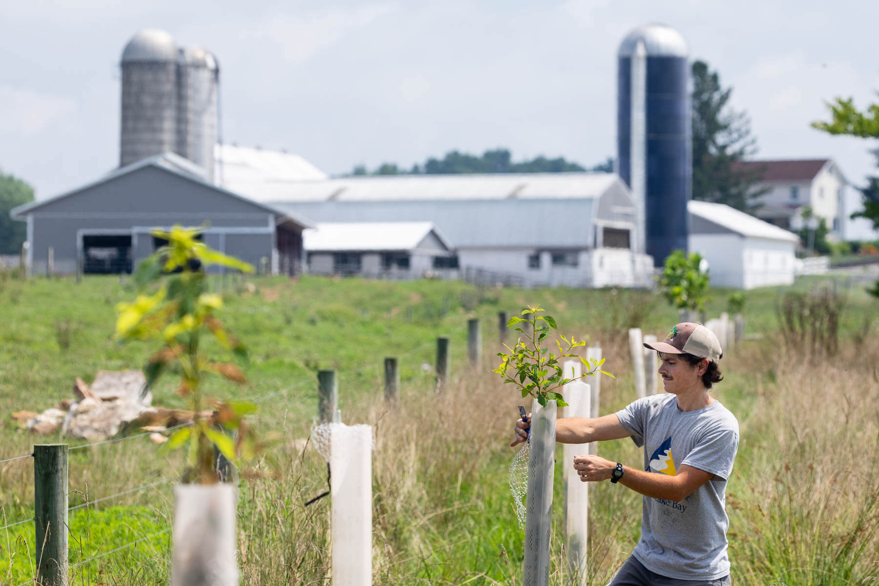 Ryan Davis of the Alliance for the Chesapeake Bay planting trees on a farm.