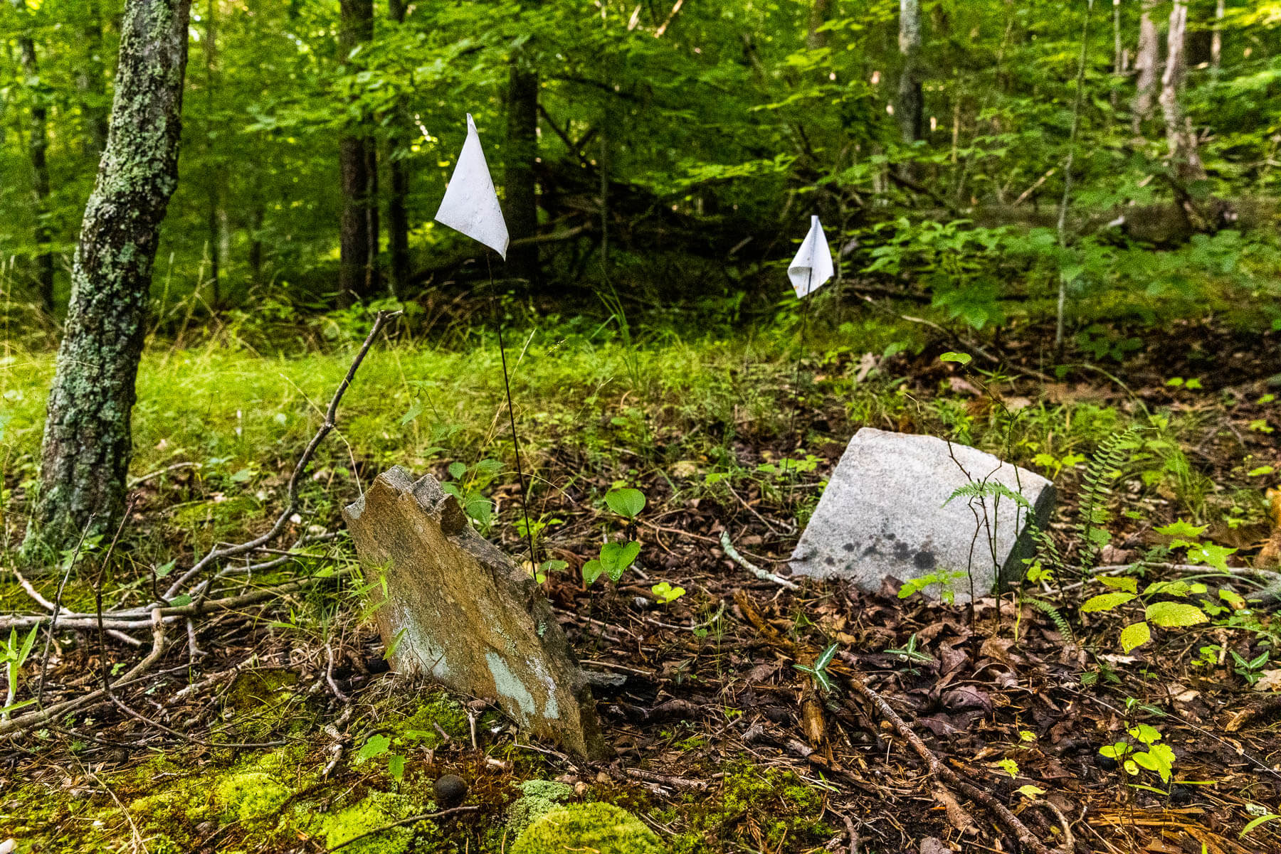 Two unmarked, old grave markers sit atop a hill in Bull Run Mountain Preserve.