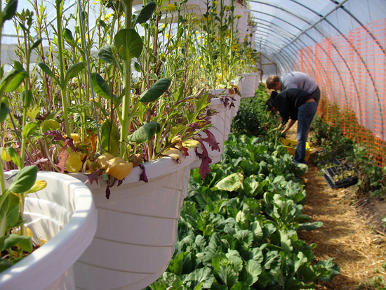 Volunteers work in a hoop house on Eco City Farms.