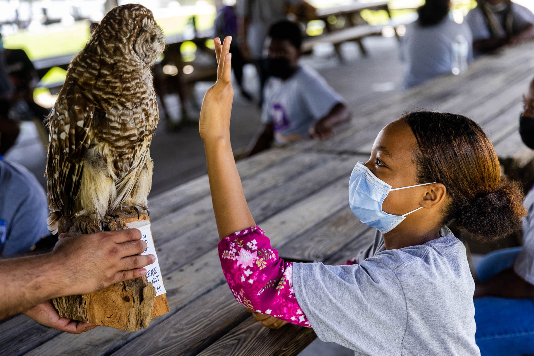 Young girl observes a taxidermied owl.