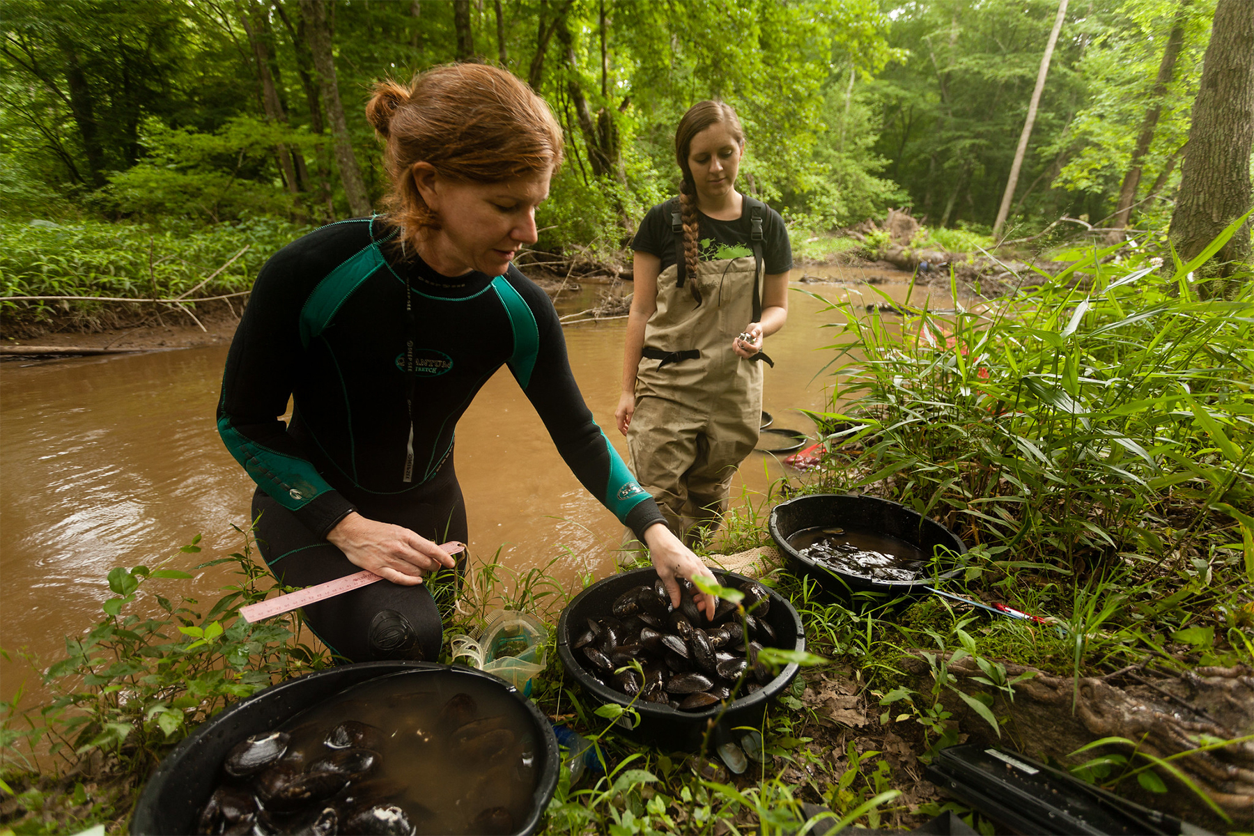 Two researchers examine mussels in a stream.