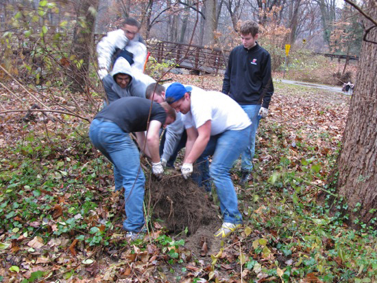 volunteers removing invasive weeds