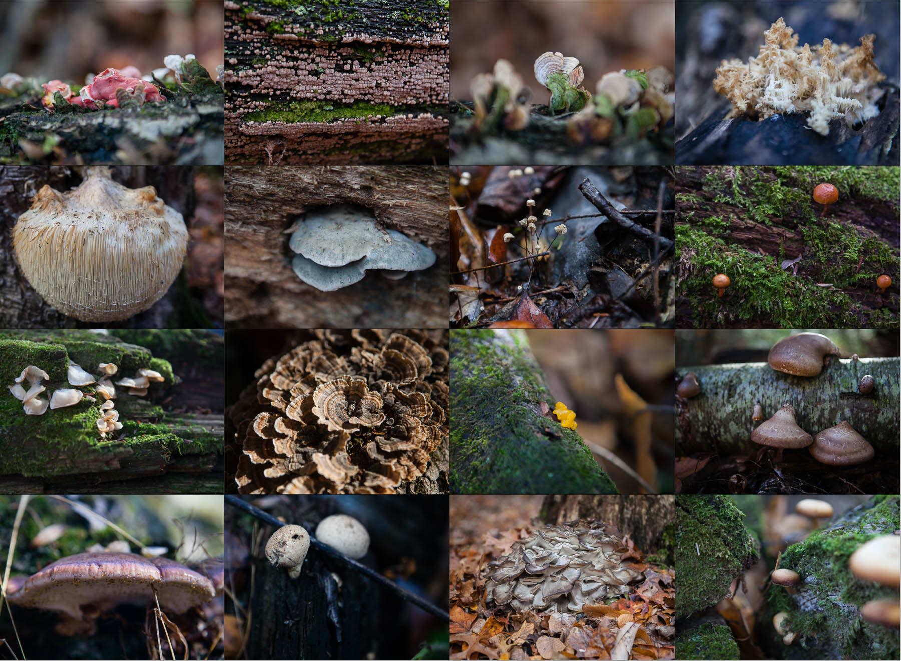 What role does the fungi play in the ecosystem The importance of fungi in nature