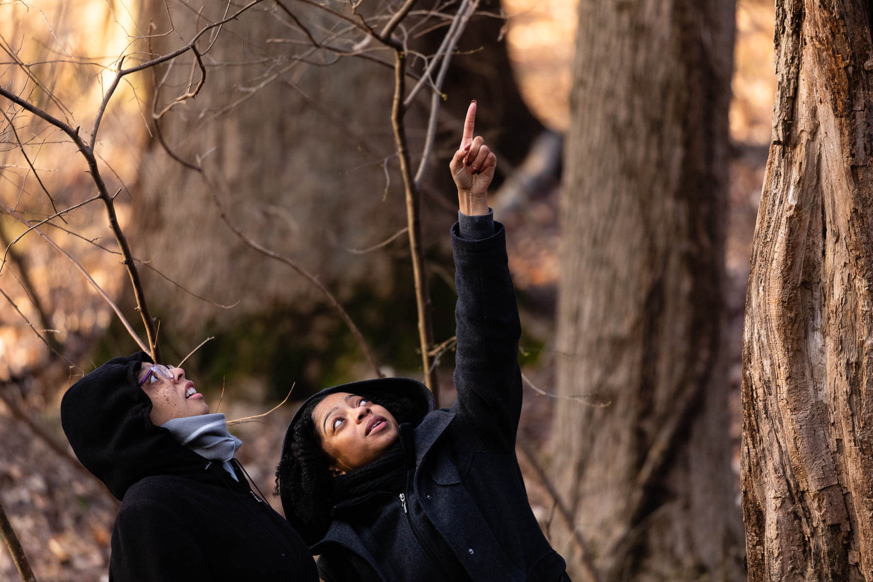Women look up at a tree