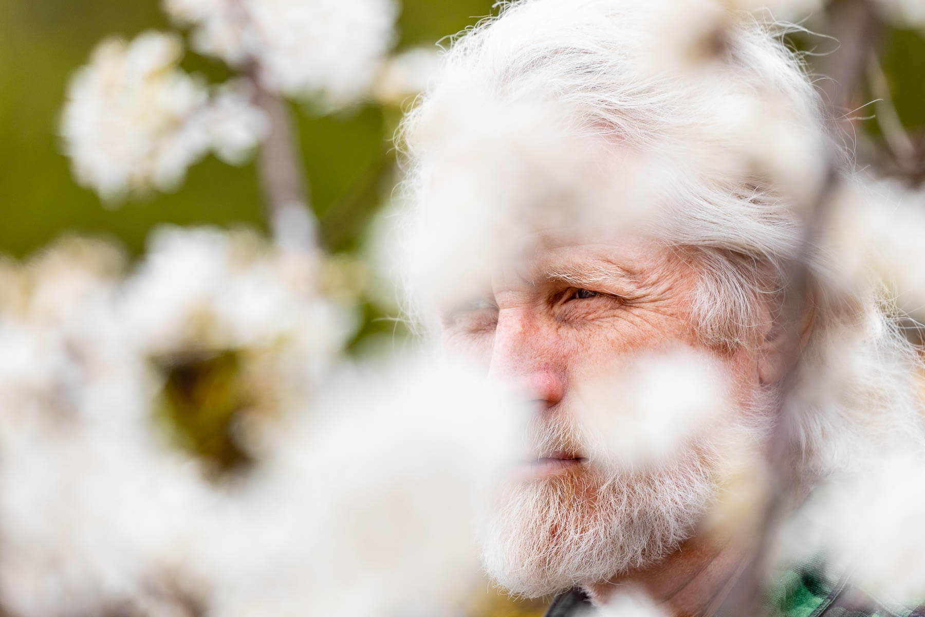 Man with white hair amid white flowers