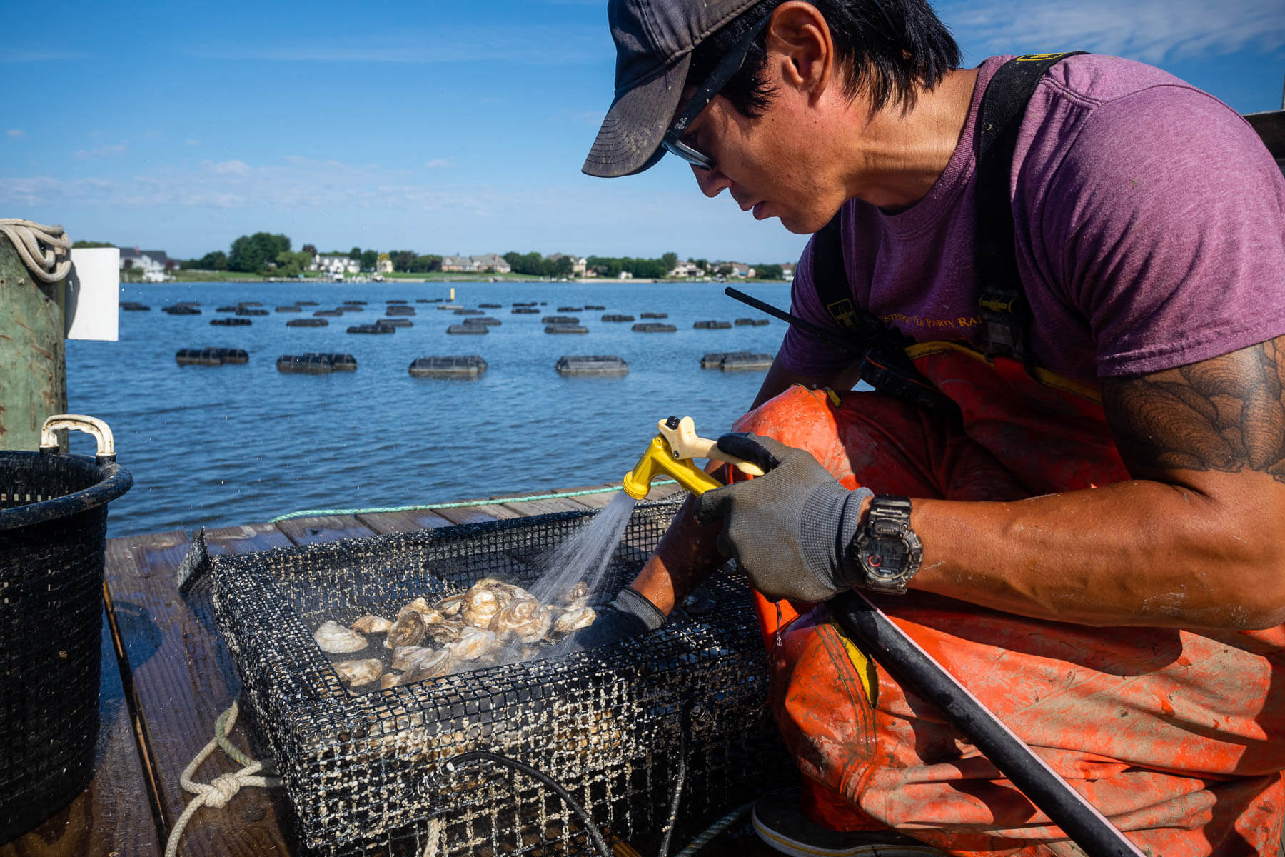 Man cleans oyster cage
