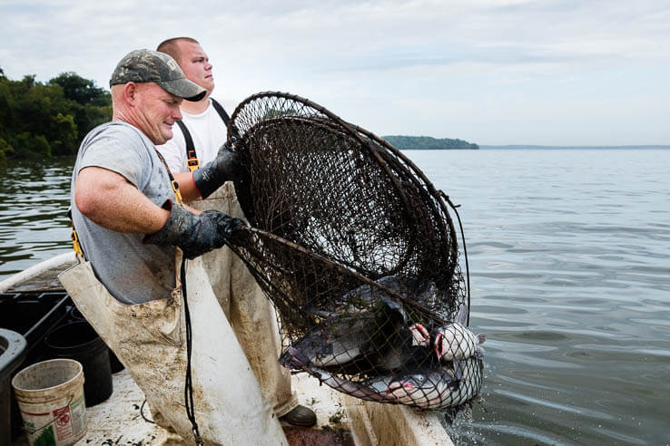 Picture of Understanding the threat of invasive catfish