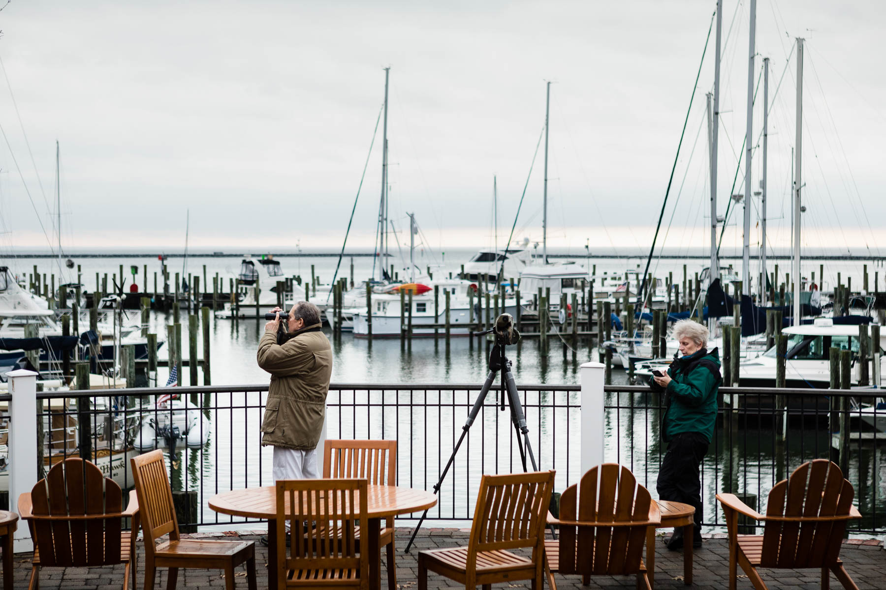 photo essay birders of a feather flock together chesapeake bay