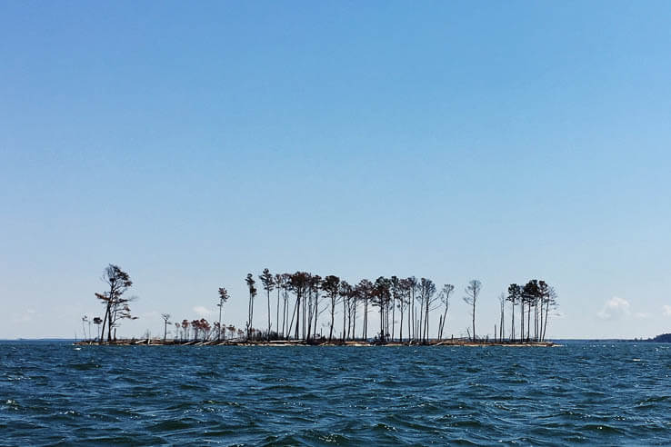 Picture of A scientist's decades-long portrait of a vanishing Chesapeake island