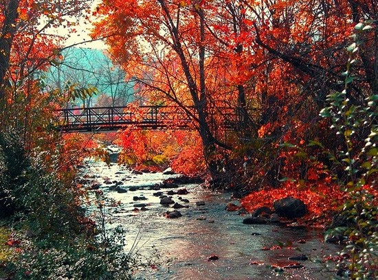 Fall foliage and a walking bridge near Happy Creek, Virginia.