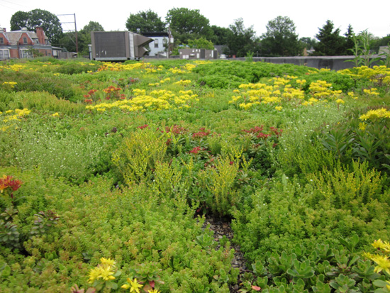 Plants on a green roof in Lancaster, Pa.