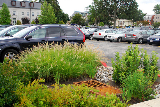 vegetated bioswale in a parking lot