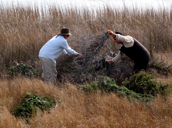 Guy and McGowan add Christmas trees to Poplar Island