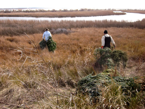 Guy and McGowan bring Christmas trees out to the marsh