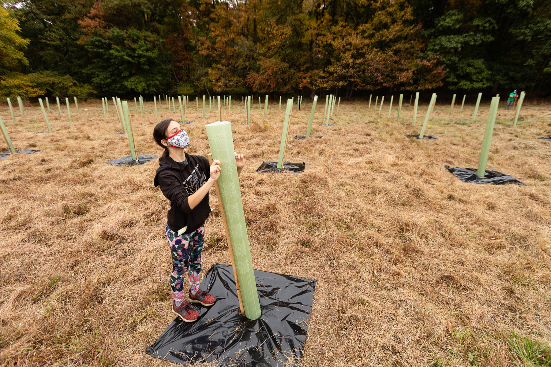A young volunteer amid rows of planted trees