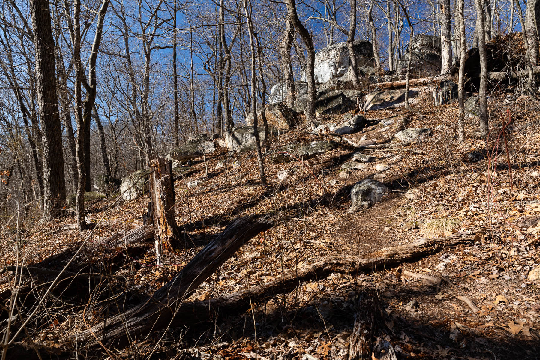 Woods and a rocky hillside