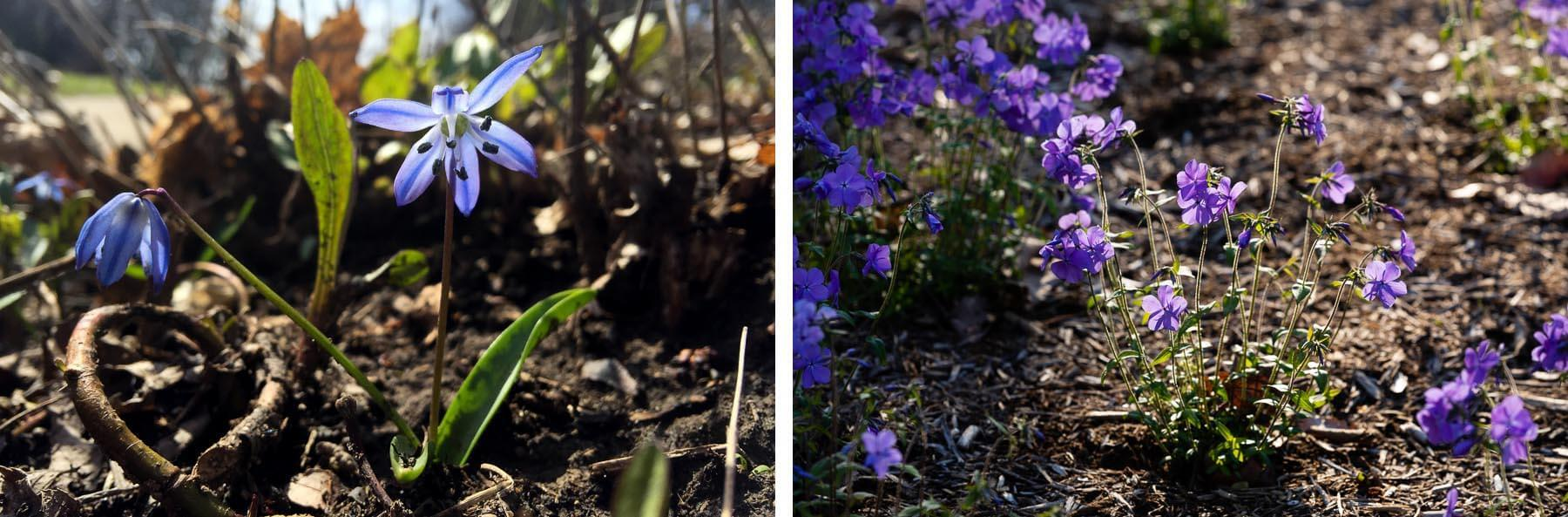 Small plants with purple flowers