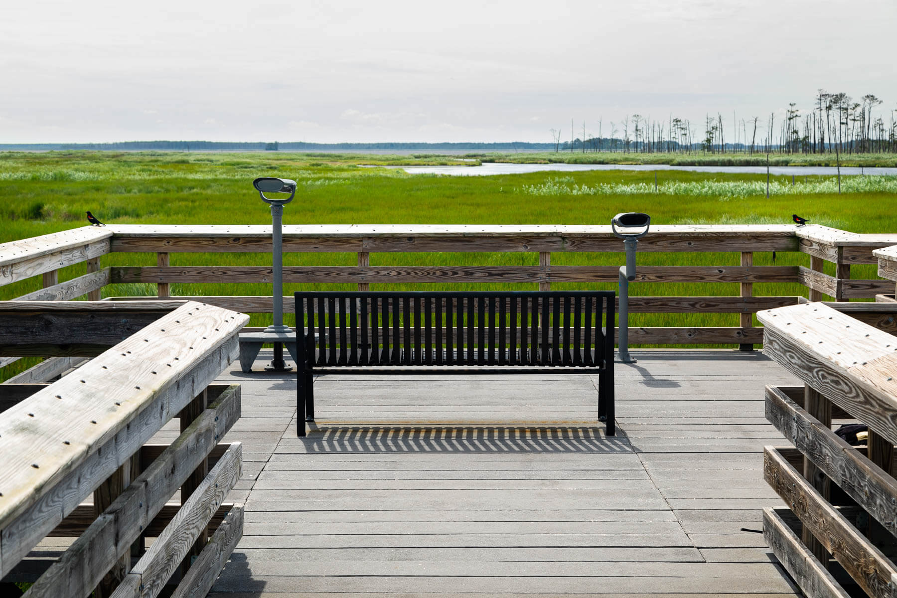 Observation bench facing an expanse of wetland.