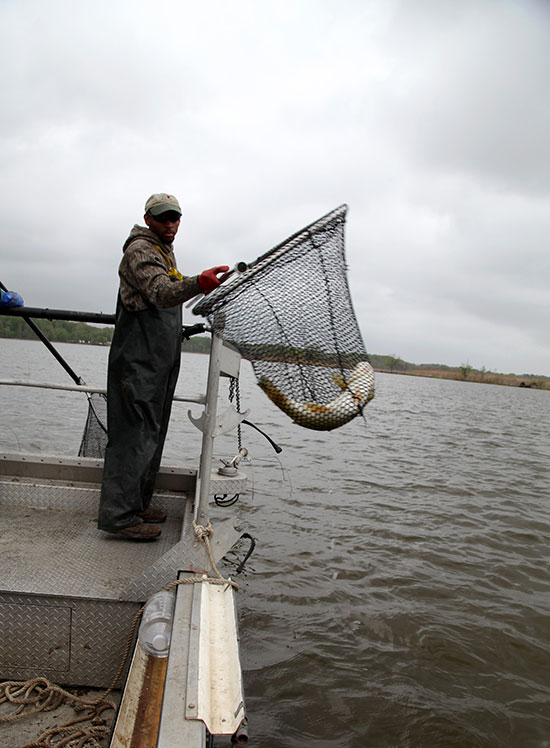 Recent news electrofishing chesapeake bay program for Tidal fish chesapeake