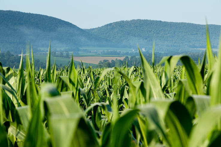 Picture of Chesapeake farms are feeling the heat