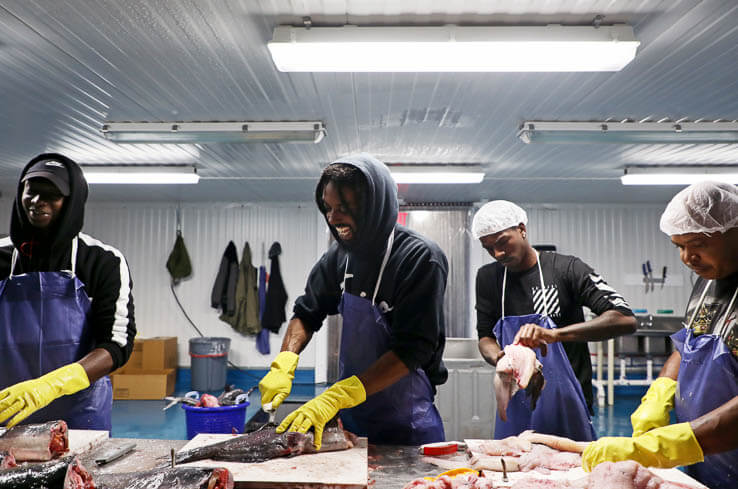 Picture of Seafood businesses go online to stay afloat