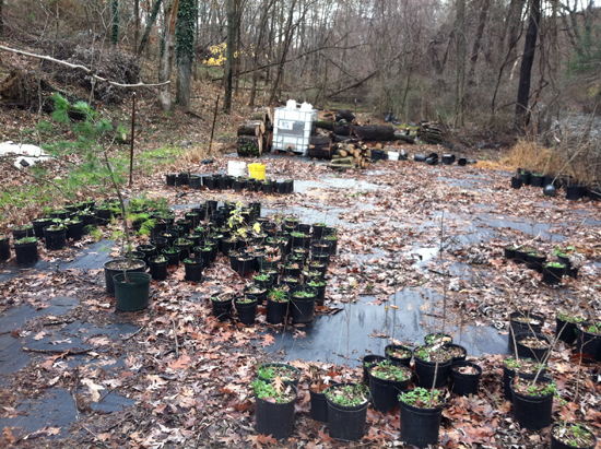 Paxton Creek tree nursery
