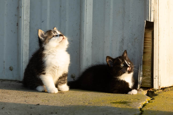 Picture of Outdoor cats ruffle feathers