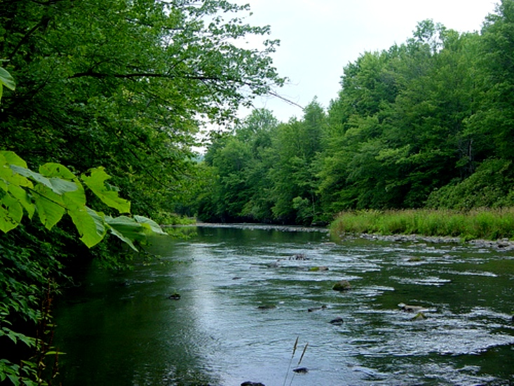 The scenic Lackawanna River bordered by trees.
