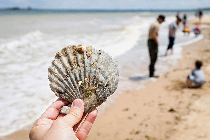 Picture of Photo of the Week: Prehistoric treasures abound at Calvert Cliffs State Park