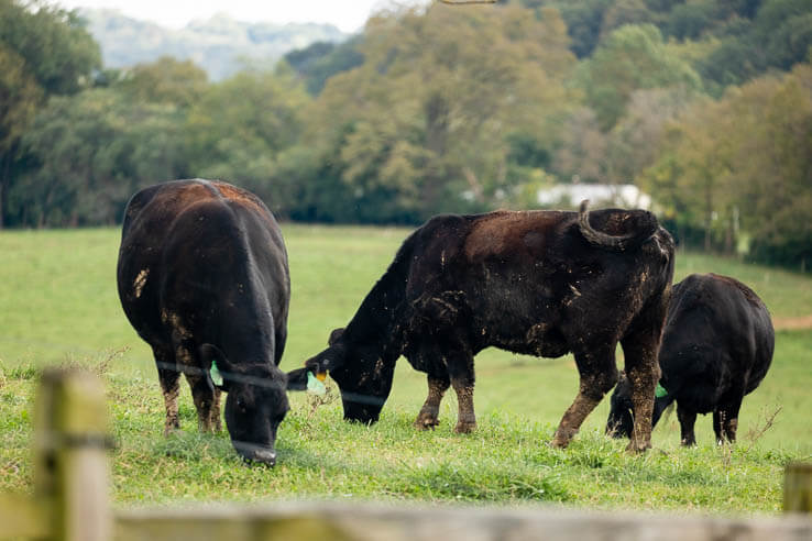 Picture of A not so impossible sustainable beef operation demonstrates success