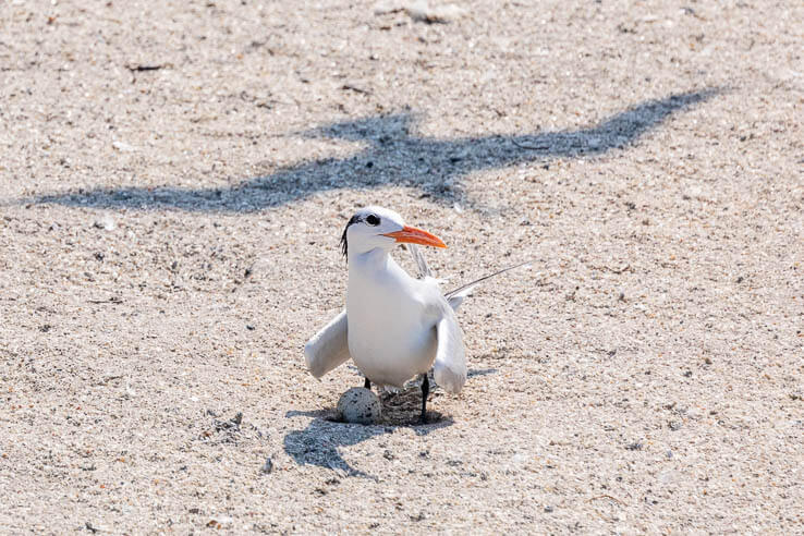 Picture of Virginia's largest seabird colony thrives amid rush hour traffic