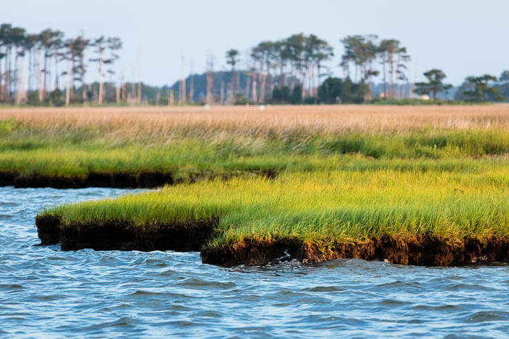 Picture of How Chesapeake Bay wetlands can contribute to U.S. carbon reduction goals