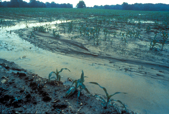 runoff from farm field
