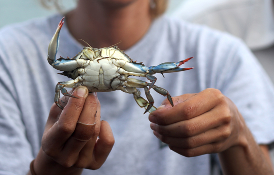 woman holding blue crab