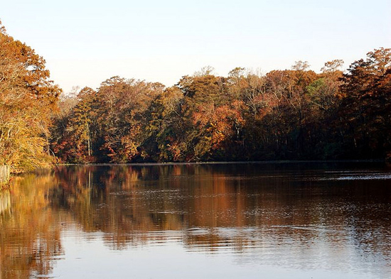 Pocomoke River State Park from the water.