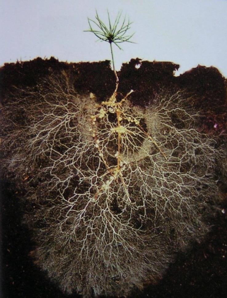 Roots growing in dirt