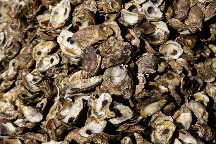 Picture of Oyster restoration now underway at eight tributaries of the Chesapeake Bay