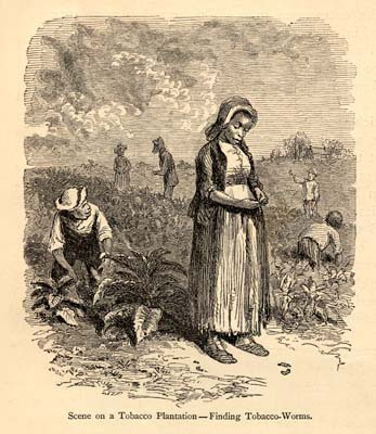 slave on a tobacco plantation