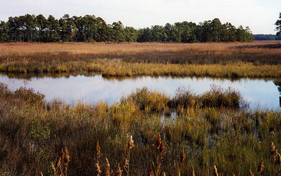 A typical Bay wetland.