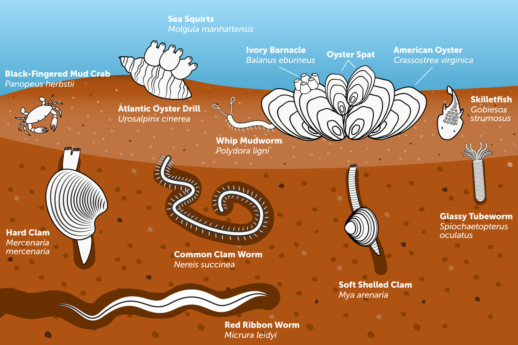 Illustration of a typical healthy benthic community