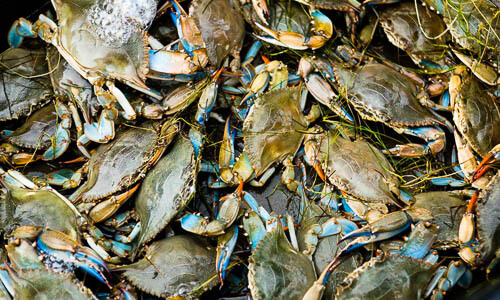 Picture of Blue Crab
