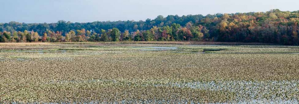 Bay 101: Wetlands in the Chesapeake Bay watershed