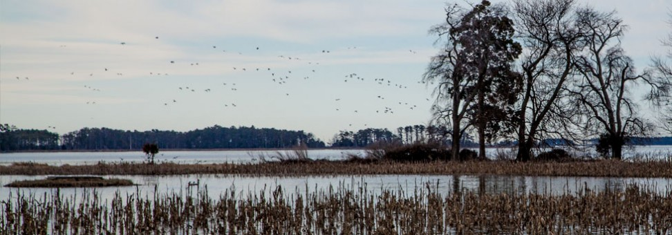 Conserving Waterfowl Habitat on the Eastern Shore