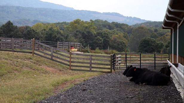 West Virginia Farm Cuts Pollution