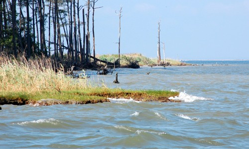 As sea levels increase, the Chesapeake Bay's tidal marshes will continue to erode away. (Chesapeake Bay Program)