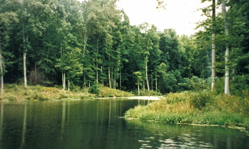 Forest buffers provide enormous benefits to the Chesapeake Bay and its tributaries. Forest buffers prevent pollution from entering waterways, stabilize stream banks, provide food and habitat to wildlife and keep streams cool during hot weather.